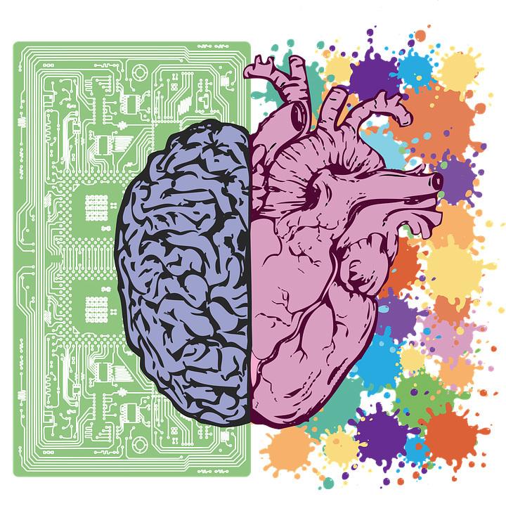 Brain  medium